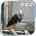 动物园专用钢丝绳围网 3