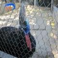 SS304不锈钢动物园围网 3