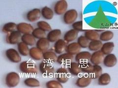台湾相思种子