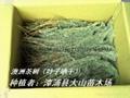 澳洲茶樹原料 提取精油純露 1
