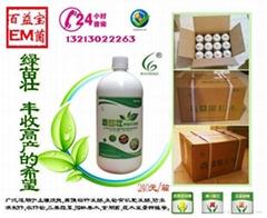 綠苗壯種植菌