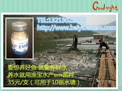 水產養殖專用漁寶em菌種