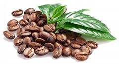 Vietnam Catimor Coffee Beans