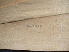 楓木雀眼木皮
