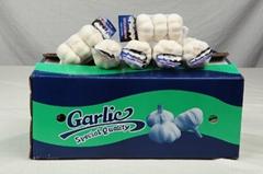 High quality Chinese Normal white garlic&pure white garlic