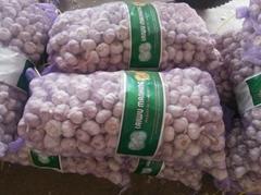 2017  China new crop garlic