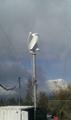 螺旋式垂直軸風力發電機 4