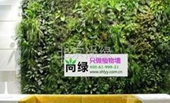 享誉京城的植物墙