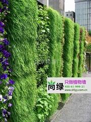 石家庄售楼处植物墙
