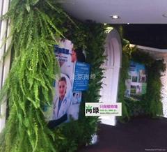 植物墙生态墙垂直绿化