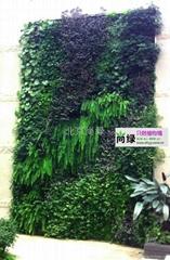 北京植物墙