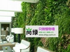 北京专业植物墙