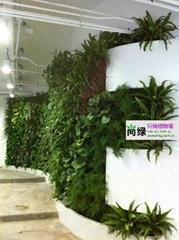 天津植物墙