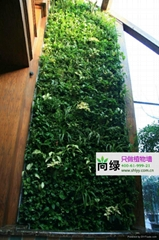 北京酒店植物墙