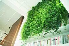 书房植物墙