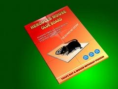 Superb Mouse Glue trap(mouse catcher)