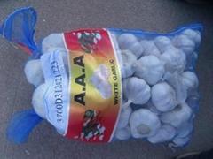 Pizhou White Garlic
