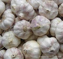 12年新鲜普白大蒜20kg/网袋