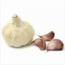 Chinese White Garlic, Pizhou White Garlic