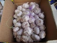 2012年新鲜5.0cm纯白蒜