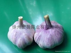 普白大蒜5.0cm