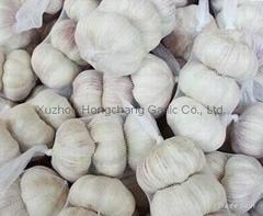2012纯白大蒜6.5cm