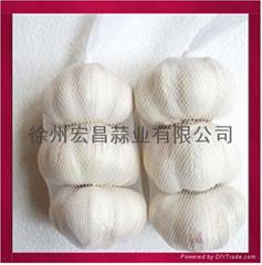 新鲜纯白大蒜