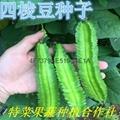 四棱豆种子价格