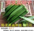 黄秋葵种子价格