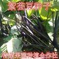 紫芸豆种子价格