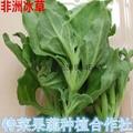 冰菜种子价格