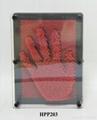 High Quality Pin Art,3d pin art