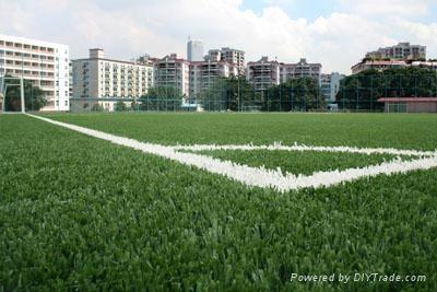 成都足球場草坪 3