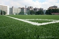 成都足球场草坪 3