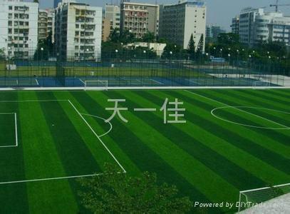 成都足球場草坪 4