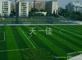 成都足球场草坪 4