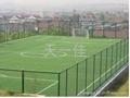 成都足球场草坪 2