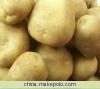 土豆种子克新1号 5
