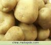 土豆種子克新1號 5