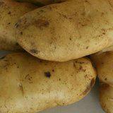 大西洋土豆种子 3