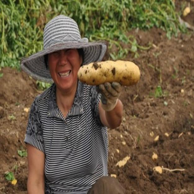 土豆種子夏破蒂 4
