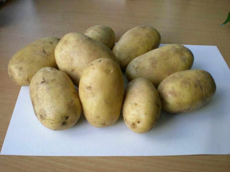 土豆种子荷兰7 2