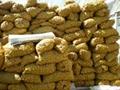 金鄉大蒜種子  3