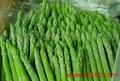 蘆筍種子阿波羅