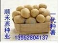 土豆種子 5