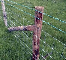 GD field grassland fence 2