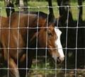GD field grassland fence 4