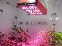 阿波羅植物燈