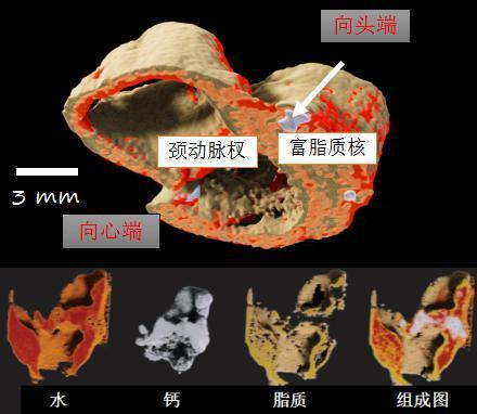 進口新西蘭MARS小動物活體成像能譜掃描儀能譜儀 4