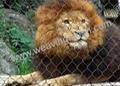 zoo mesh